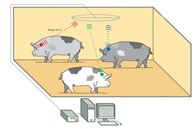 Motion detection in animals